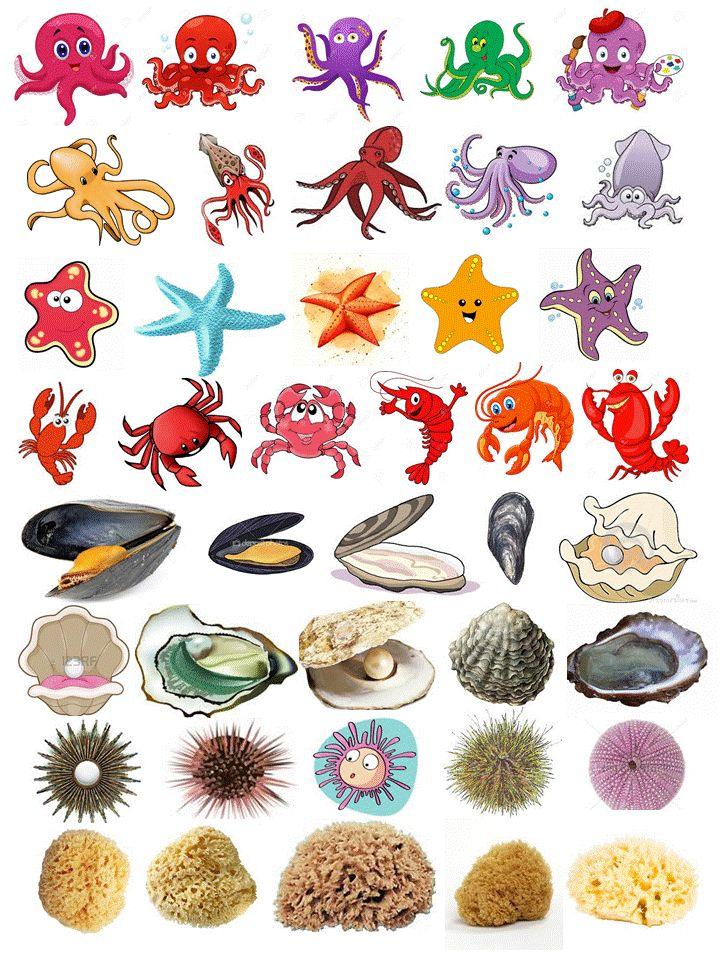les gommettes mer mollusque coquillages crustacés