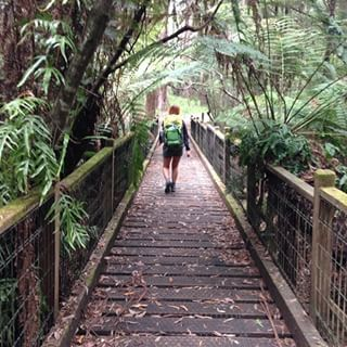 Sherbrooke Falls Trail | 21 Melbourne Walks That Will Take Your Breath Away