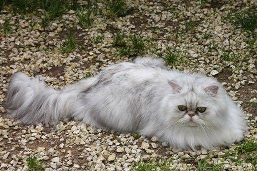 Karmy dla kotów dorosłych