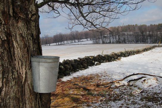 Best prices for Organic Maple Syrup