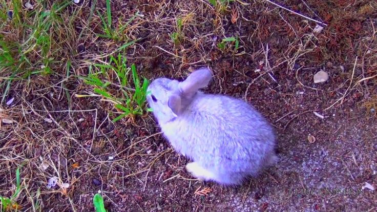 Cutest Baby Bunny – First Time Outside – Running, Walking, Eating     #Babies, #…