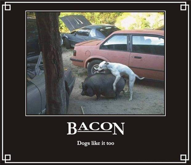 dogs-like-bacon-funny-bacon