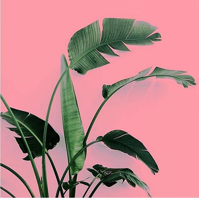 @PLANTSONPINK FOLLOW Whether you use Instagram for inspiration or to showcase your own work, one thing is certain- Instagram has a life of its own. The more we look the more we like what we see. Lotte van Baalen is one of the people that keeps creativity alive by bringing beauty and art to the [...]