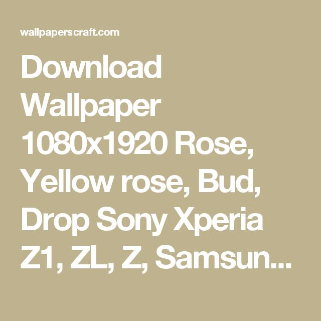 Download Wallpaper 1080x1920 Rose, Yellow rose, Bud, Drop Sony Xperia Z1, ZL, Z, Samsung Galaxy S4, HTC One HD Background