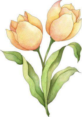 Imagenes de flores coloreadas - Imagenes y dibujos para imprimirTodo en imagenes y dibujos