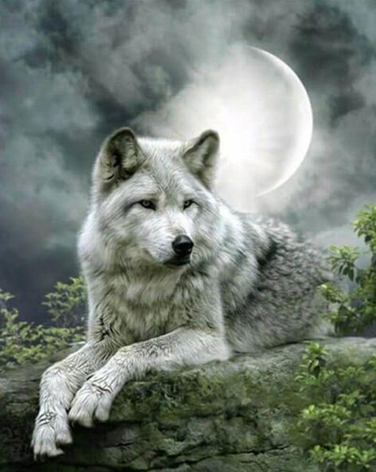 картинки про волков на телефон такое зумба, почему