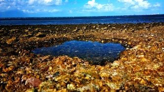 It was Saturday, my Geology class had an excursion to Shorncliffe. While mapping, I managed to capture this beauty.