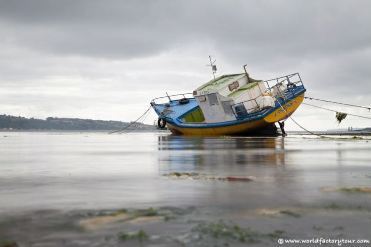 Ile de Chiloé : coquillages et crustacés - http://www.worldfactorytour.com/ile-de-chiloe-castro-eglise-bois-plage-cucao/?utm_source=Pinterest&utm_medium=AutoPost&utm_campaign=Ile+de+Chilo%C3%A9+%3A+coquillages+et+crustac%C3%A9s