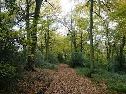 Cat's walk to the graveyard takes her through the beech woods