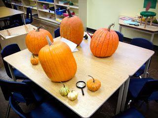 Play To Learn In Kindergarten: Pumpkin Inquiry PART 1