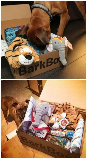 BARKBOX (bahrk-boks), noun: For humans, BarkBox is a monthly box of paw-picked toys and all-natural treats. For pups, it's the joy of a thousand belly scratches. For mailmen, it's burying the bone and hatchet.