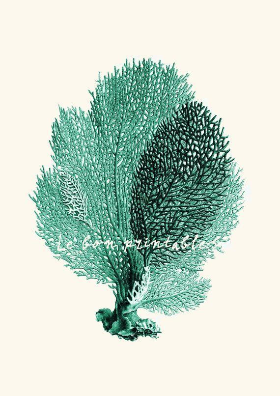 Vintage sea fan coral instant download printable art jpeg on Etsy, $2.49