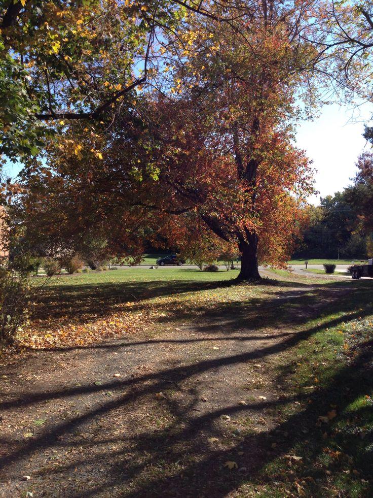 Front yard. Leesburg, Leesburg va, Country roads