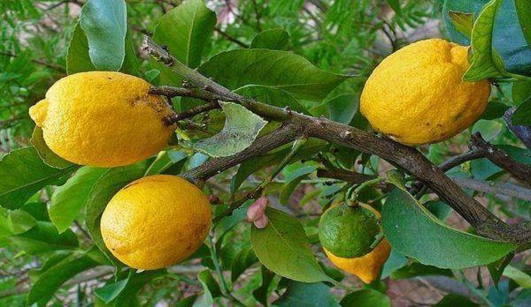 Beneficios de tomar agua con limón por las mañanas