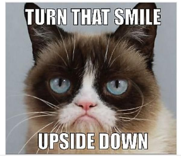 Image of: Movie Grumpy Cat turn That Smile Upside Down the Official Grumpy Cat Bangor Daily News Grumpy Cat turn That Smile Upside Down the Official Grumpy