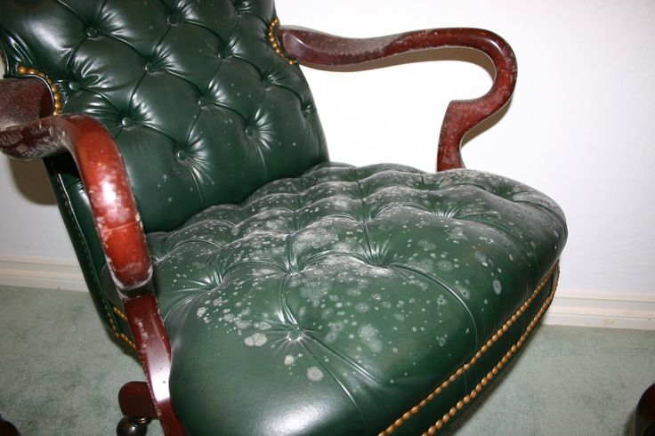 Remove All Stains.com: How to Remove Mold from Leather