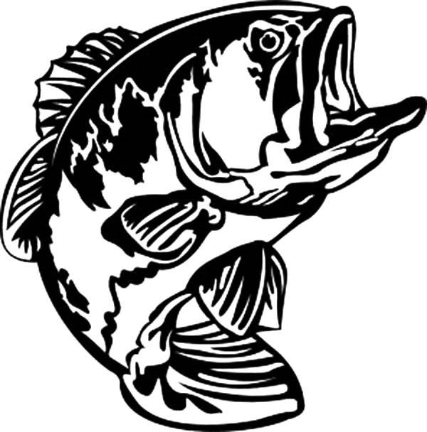 600x608 Sea Predator Striped Bass Fish Coloring Pages Best Place