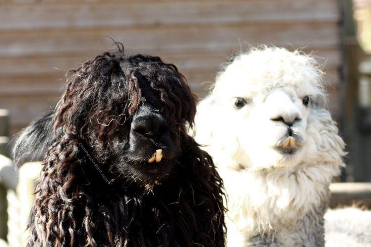 Animaux  * http://www.commeuninstant.com/galerie/faune-et-flore/animaux/jardin-animalier