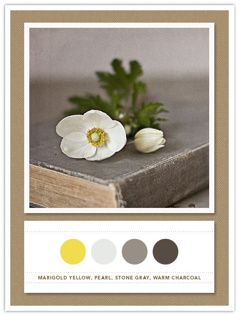 Marigold yellow, pearl, stone gray, warm charcoal: Warm Charcoal, Living Rooms, Stones Gray, Pearls, Marigold Yellow, Google Search, Colors Palettes, Colors Schemes, Yellow Kitchens
