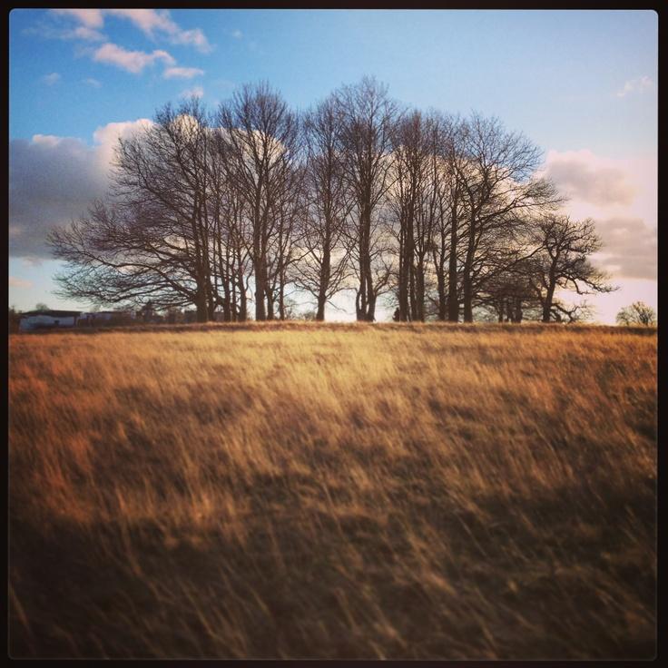 Knole deer park, Sevenoaks; New Year's day walkies! © Natalie Seldon @ Estella Cupcakes/food and props styling