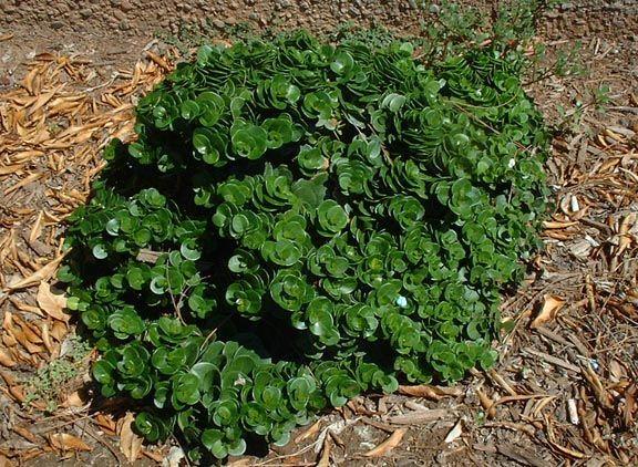 Herb Garden Outdoor Landscaping