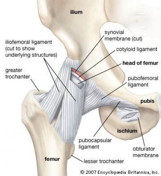what does psoas stand for