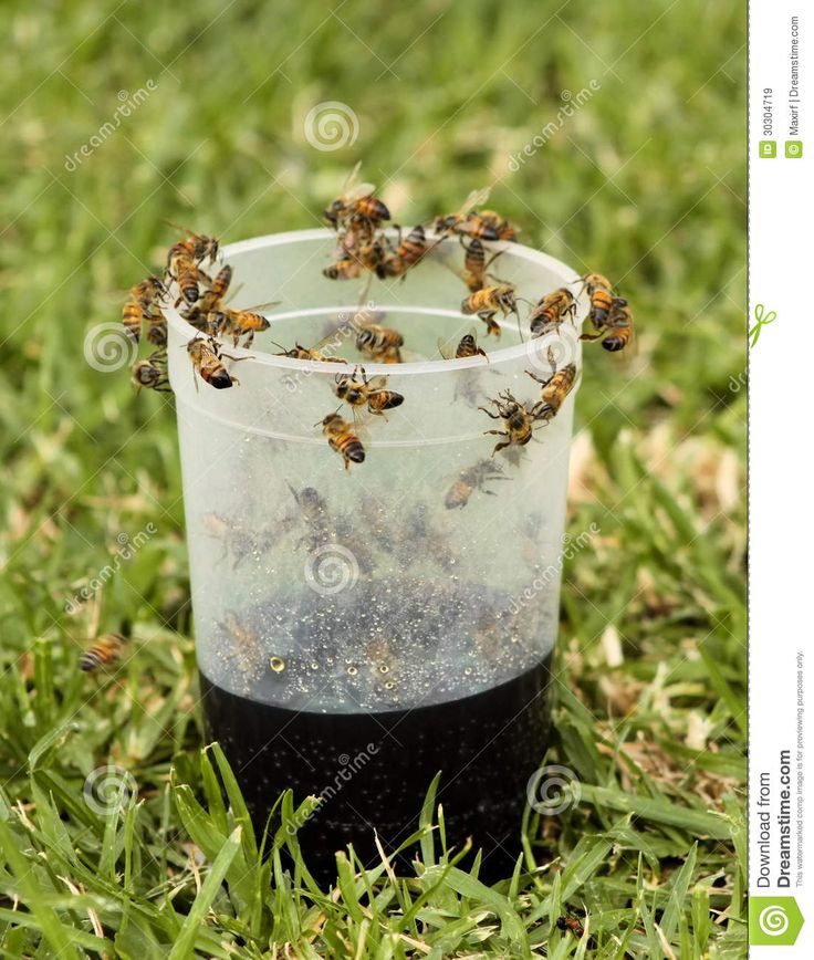 african bee images   African Honey Bee Drawn By Cool Drink in Glass.