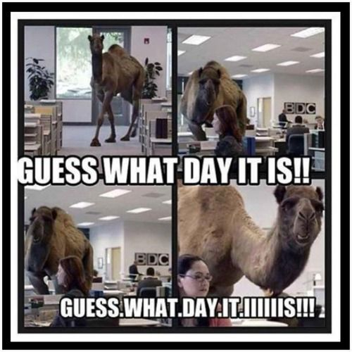 Geico Happy Hump Day Images Geico camel hump daaayy