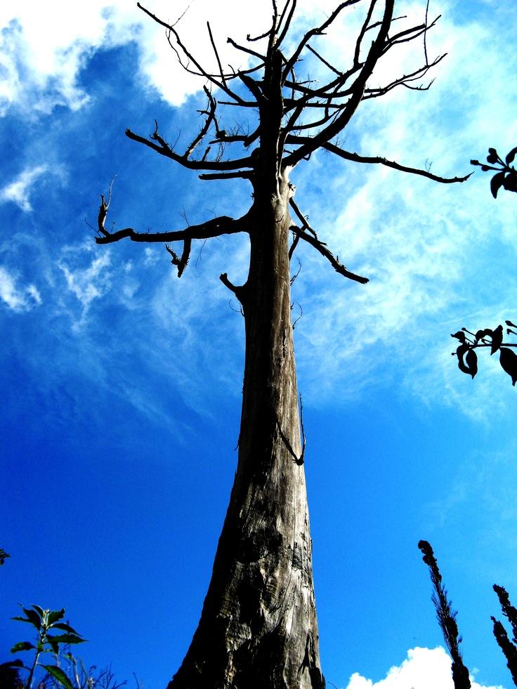 Tree at a angle