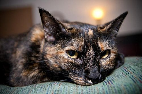 "* * TORTIE:  "" Wutevers yoo do, makes sure it makes ya happy - 'cept murder."""