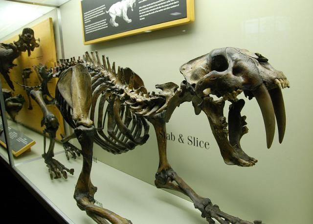 A list of the most notable dinosaurs and prehistoric animals discovered in the state of South Carolina.