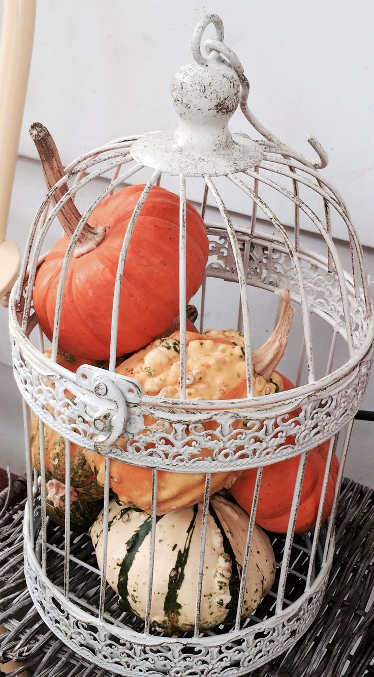 Gourds in a bird cage, bird cage decor