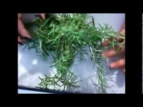Aceite de canela casero para masajes cómo prepararlo / Inerya viris - YouTube