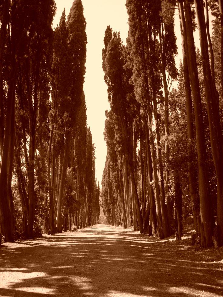 San Donato in Collina
