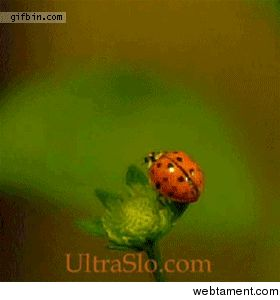A Flying Ladybug #trippy #flying #ladybug #animated #gif #entertainment #interesting