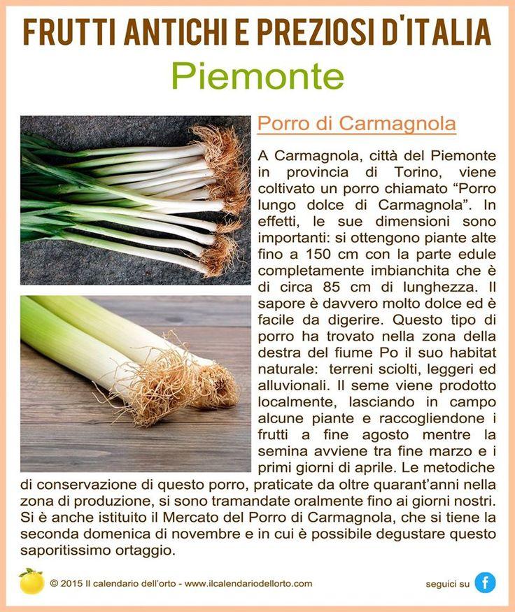 Piemonte: Porro di Carmagnola