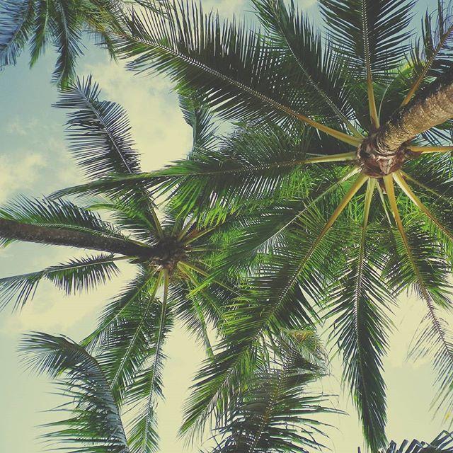 🌴🌴 🌴 #bestview #palmtrees…