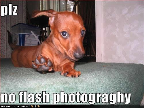 funny dachshund pictures | funny dachshund photos (7)