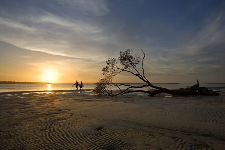 Mangrove tree and two boys