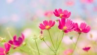 Wallpapers De Flores Animadas Para Bajar Gratis A La Pc 3 HD Wallpapers