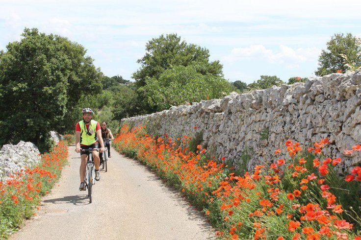 Sabato 25/05 alla scoperta della Valle d'Itria!  Twitter / FrancescoLiuti  http://discovering.viaggiareinpuglia.it/?event=percorso-in-bicicletta-cisternino