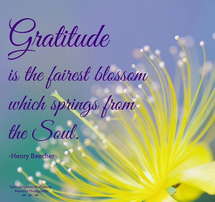 Image result for gratitude springs from the soul gif