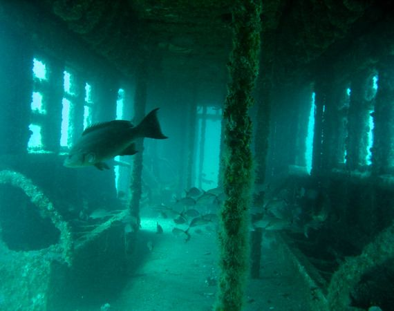 Old NYC subway cars become thriving aquatic reef http://fineprintnyc.com/blog/old-nyc-subway-cars-become-thriving-aquatic-reefs