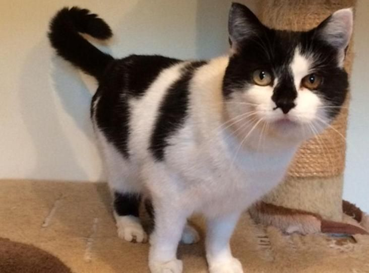 Rosie Was Found In July Wandering The Streets In A Very Bedraggled State She Was Riddled With Fleas And Had Bald Patches T Cat Adoption White Cats Adoption Uk