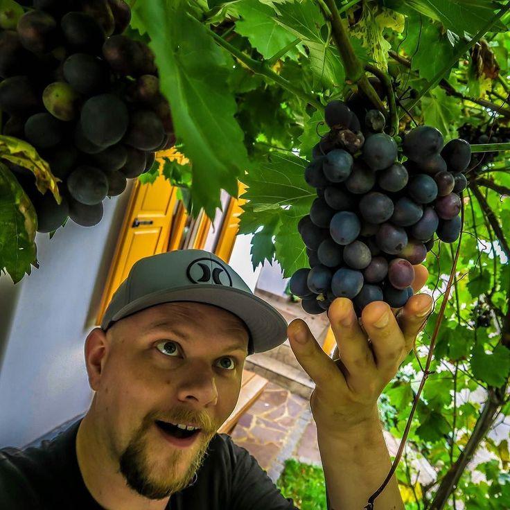 Getting exited about wine in Tieschen :-) #travel #wine #austria #styria #tieschen #photography #canong7x #selfie