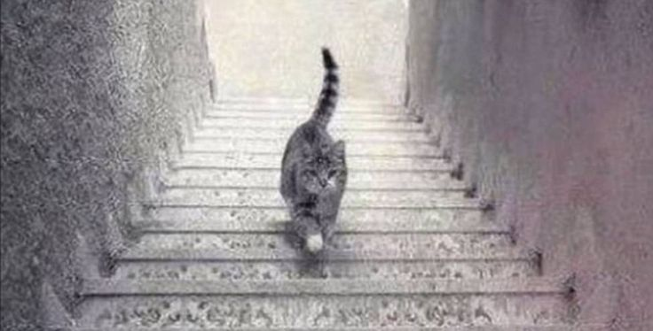 KATTEPINE: Det er ikke godt å si om denne pusen er på vei opp eller ned trappa. Foto: 9gag