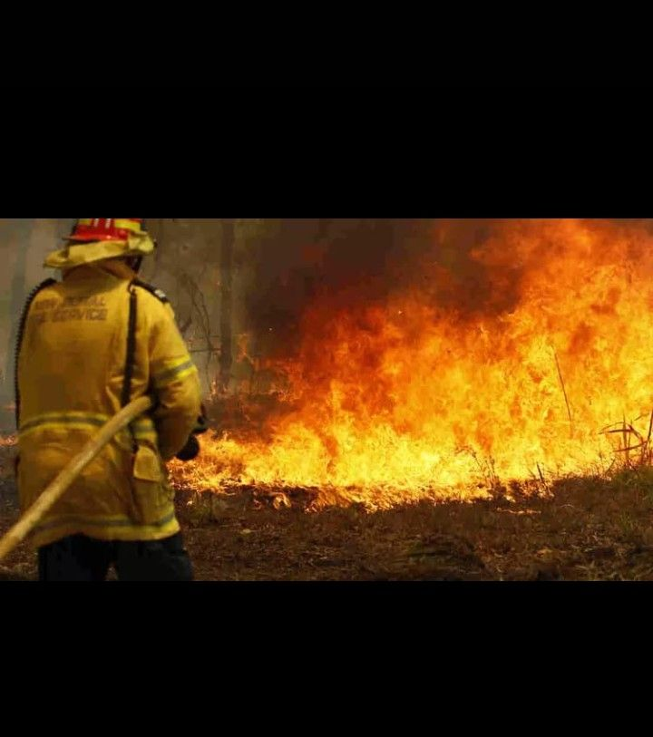 Kebakaran Hutan Hutan Hewan Pertahanan