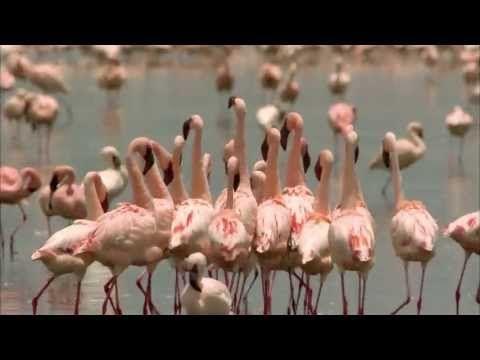 Ein Flamingo sucht Gerti - Billa Sticker Promotion