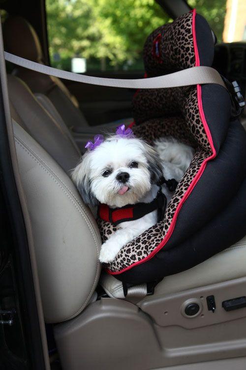 PupSaver's Rear-facing Small Dog Car Seat