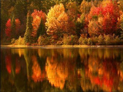 Stunning Fall Foliage photo
